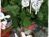 Watercolorwings.jpg