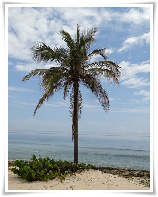LABADEE -Haiti
