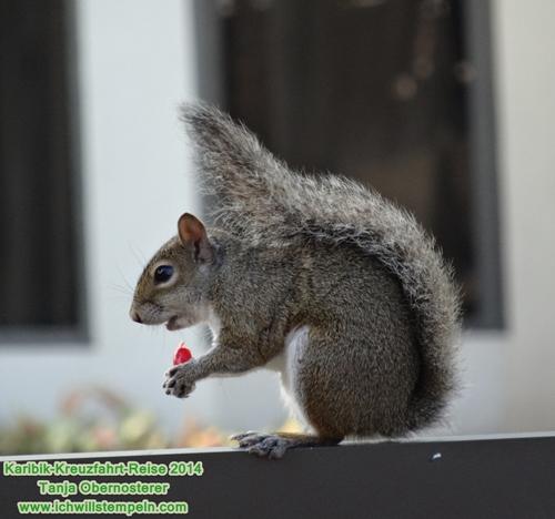 Fort Lauderdale - Hyatt - 0-Streifenhörnchen