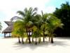 Mexico Palmen und Sand