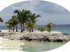 Mexico Palmen